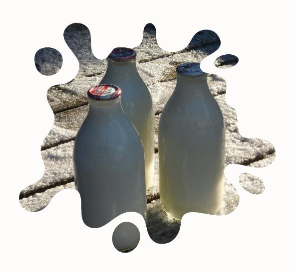 Milk bottles splash cut out